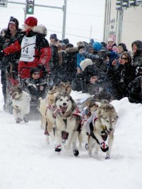 This year's Iditarod start on 4 Avenue in Anchorage. Photo: Pam Wolfe