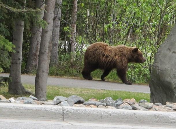 Just walking down the street. Photo: Heidi Nesttun-Sunde