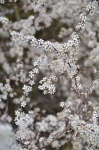 ...a time for blossoming... Photo: Unni Holtedahl