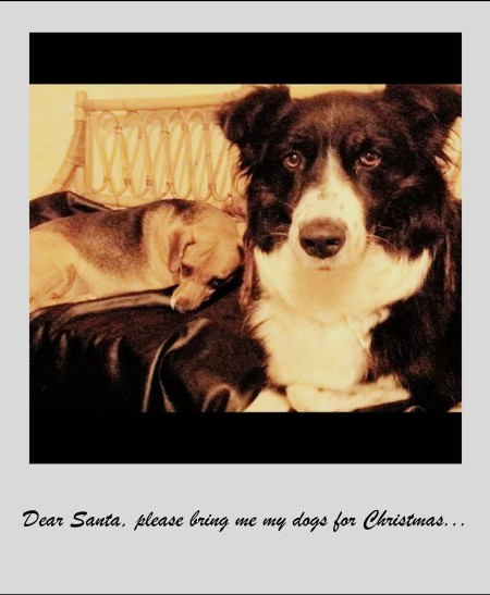 Silvia_dogs2